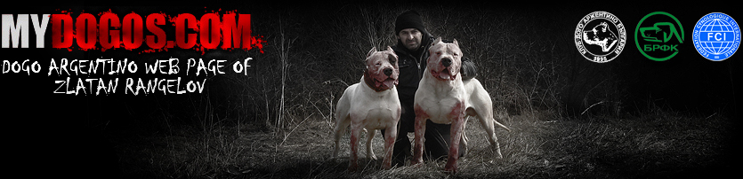 Dogo Argentino Breeder